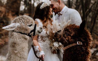 Alpaca Forest – Ein romantischer Waldspaziergang mit Alpakas