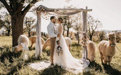 Alpaca meets Fine Art Wedding – Eine rustikale Bohohochzeit im Fine Art Stil in Pastelltönen